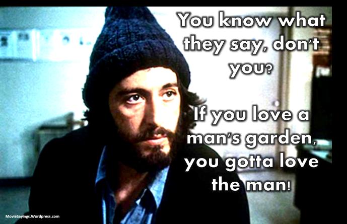 Al Pacino - Serpico (1973)